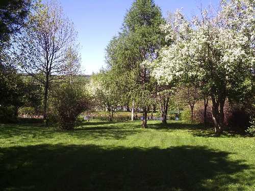 Pommier en fleurs - Juin 2019