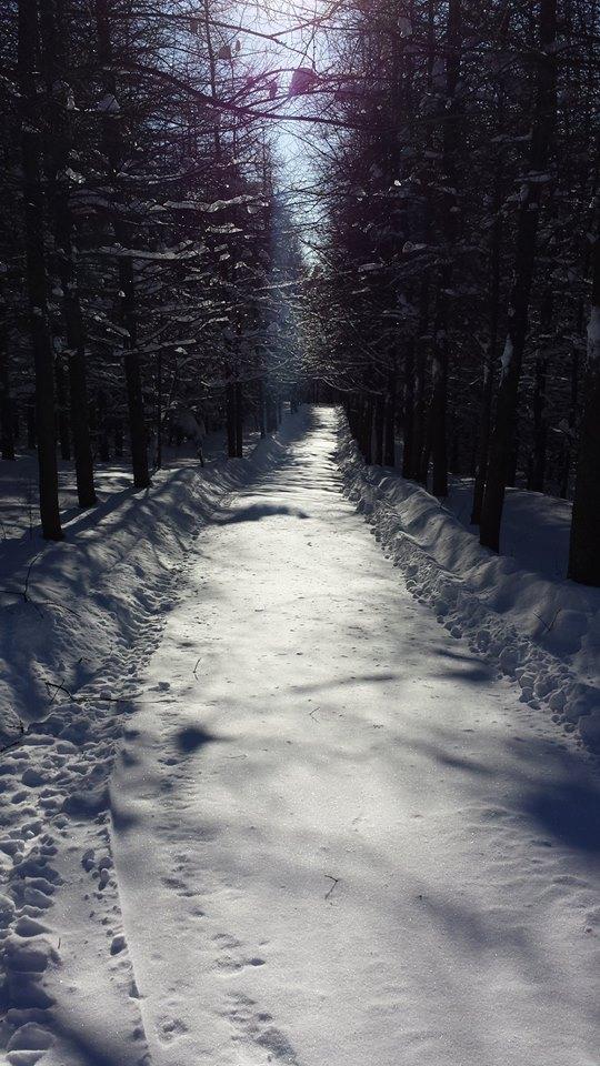 Sentier dans les mélèzes - Février 2019